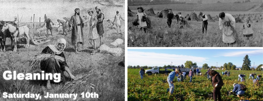 Gleaning April 2015